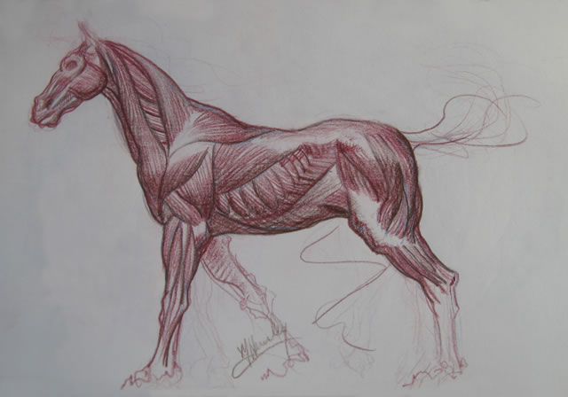 Michael Hensley The Art Of The Horse Equine Studies Anatomy Of